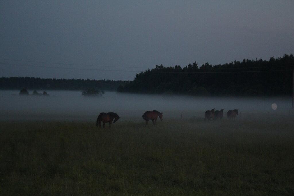 Hobused udus