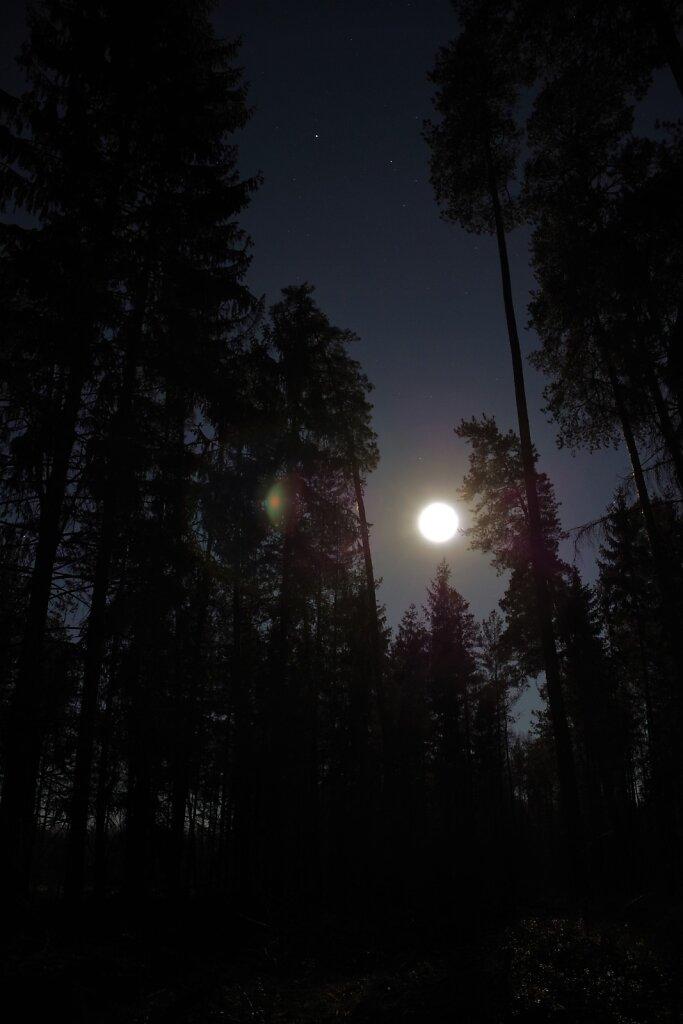Kuuvalgus metsas