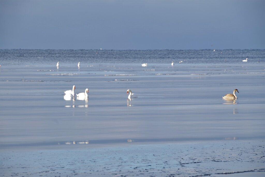 Luiged talvisel merel